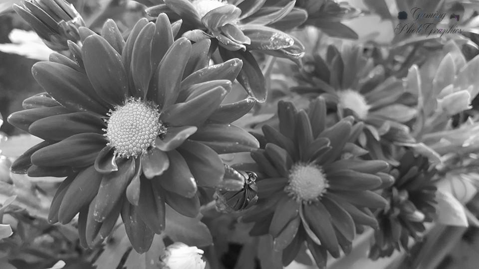 Flowers #1.jpg