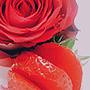 Rosenregen