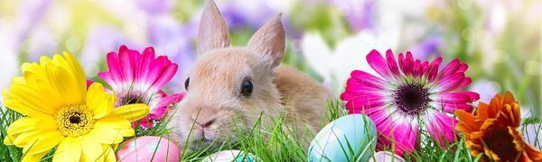 Ostern kommt dieses Jahr früher!
